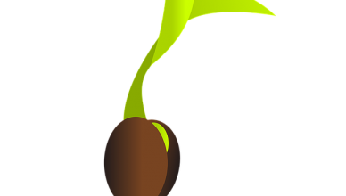 klíčidla semen