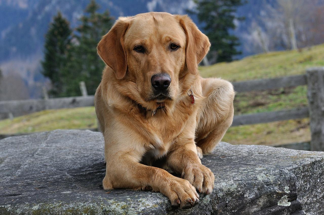 dog-548611_1280