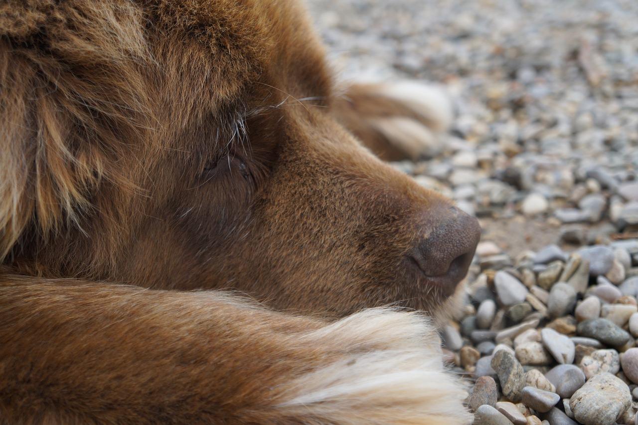 dog-731546_1280