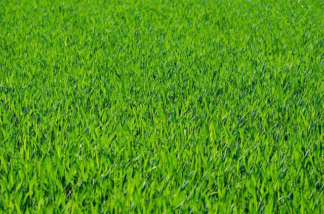 sekačky na trávu