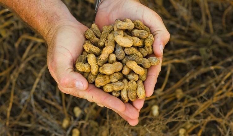 peanuts-982663_1280