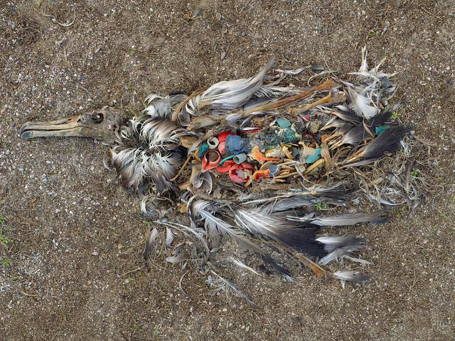 pollution-trash-destruction-overdevelopement-overpopulation-overshoot-17