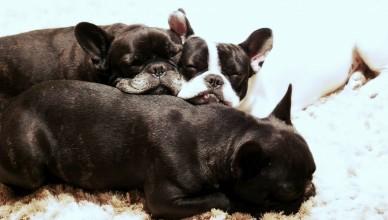 puppies-115081_1280
