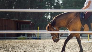 Chapsy na koně