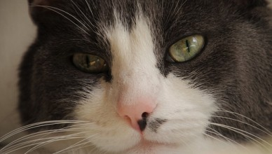 bylinky pro kočky